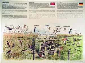 Fågelsjön