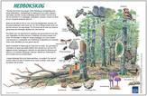 Hedbokskogen